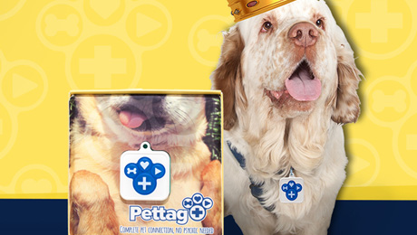 Pet Tag Plus Wants to Put Your Dog's Face On Their Product